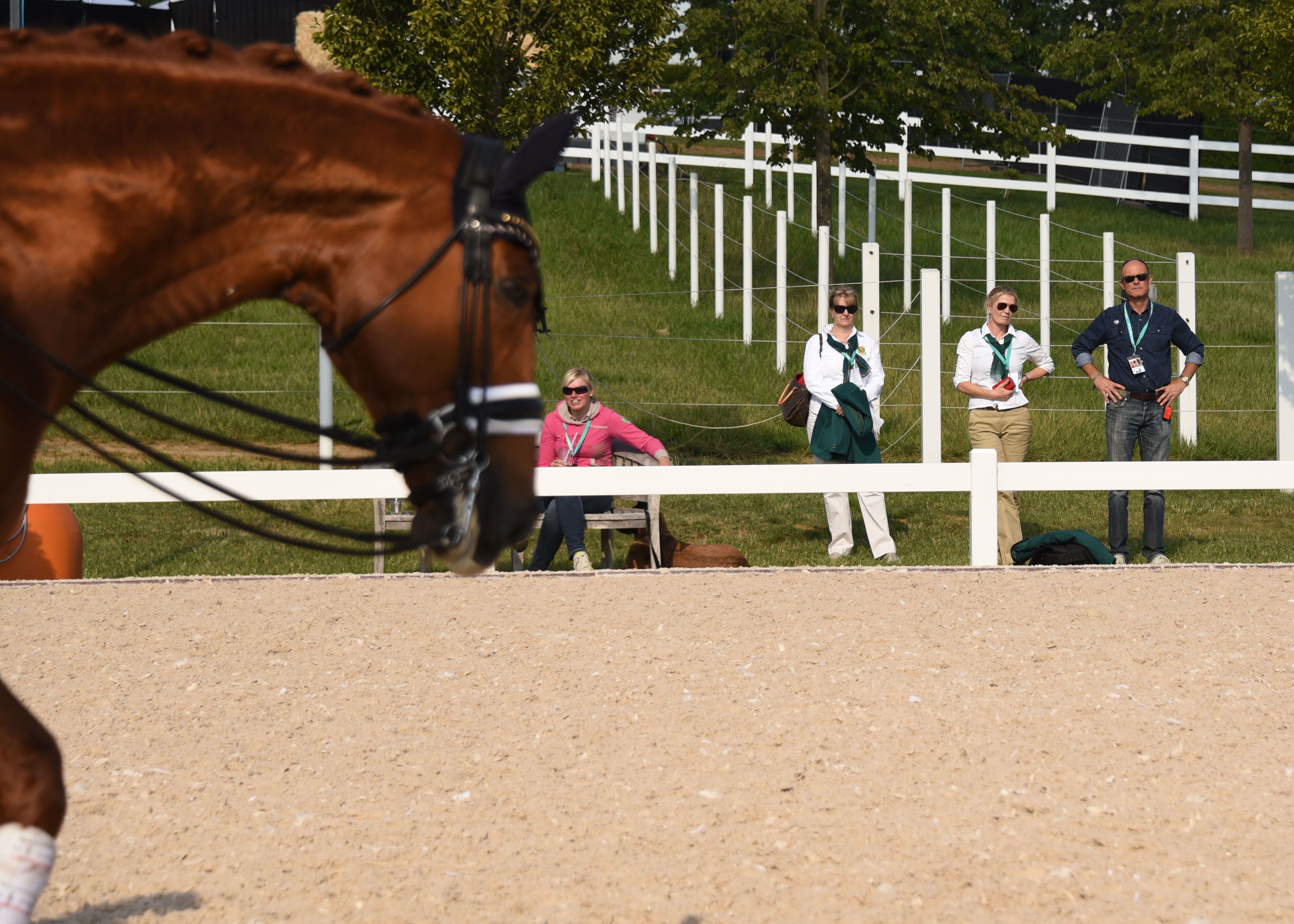 a valiant effort for south africa at perl borg e questrian catherine berning warming up good support from the sidelines