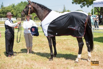Sonnentanzer (Oldenburg) – Licensed both by Oldenburg and SAWHS, a dressage stallion owned by Berghof Stud and recently won Grand Champion in Hand Warmblood at HOY 2016
