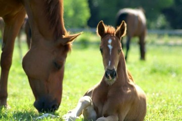 Filly by Damon Hill x Breitling x Weltmeyer
