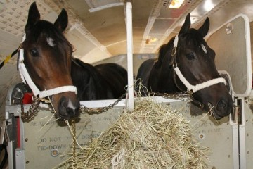 Horses on the plane